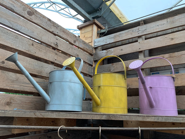 Coloured Watering Cans