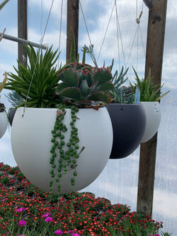 Mixed Succulent Hanging Globe
