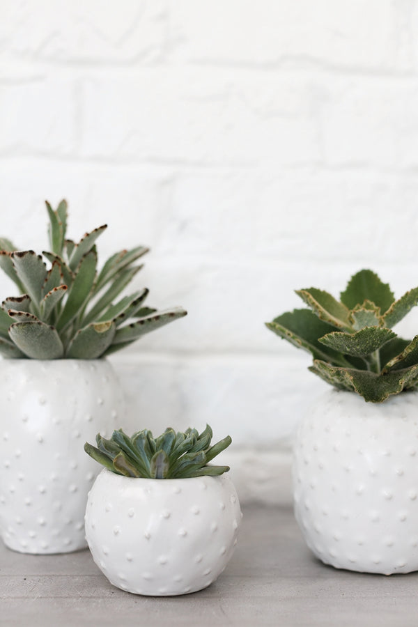 Three different sized white ceramic pots with cactus-like texture styled with succulents.