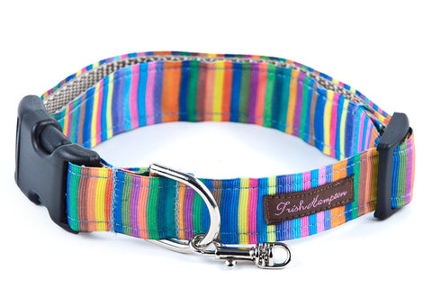 Rainbow Candy Stripe   Dog Collar - 608