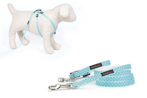 Teacup Aqua/White Mini Polka Collar/Harness/Lead - 101