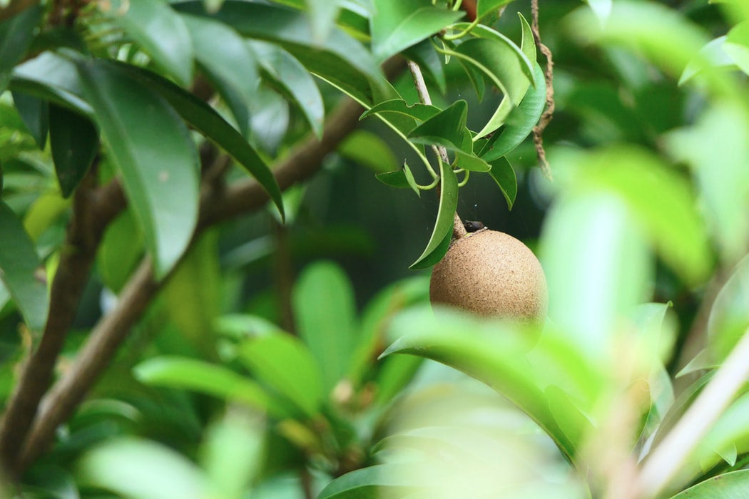 green-leaves-with-fruit-on-tree-plant-based