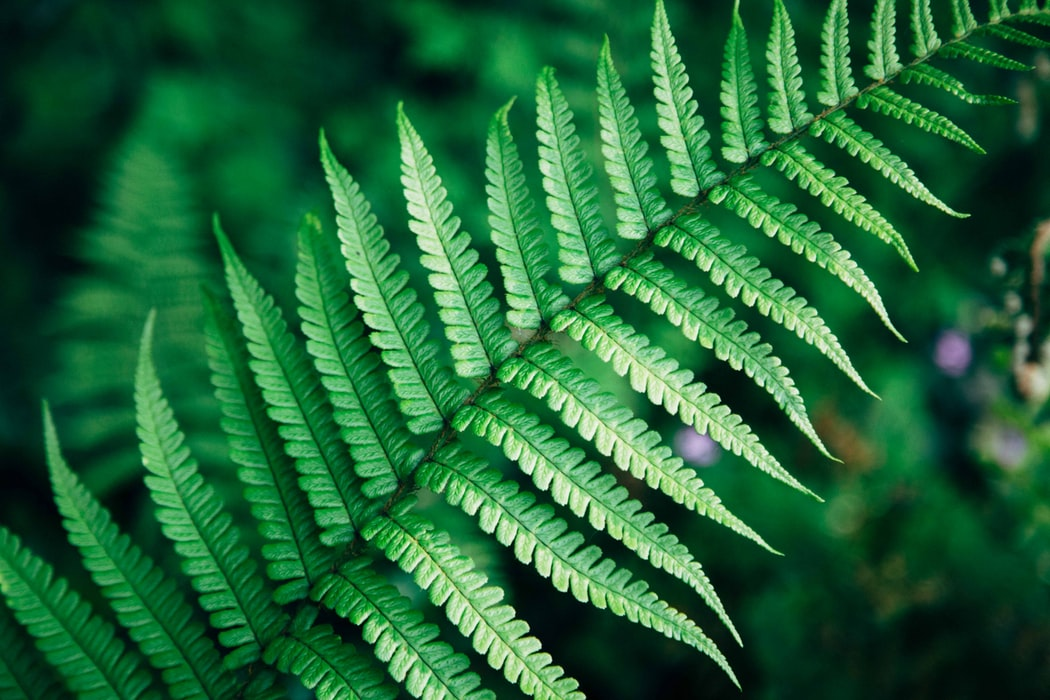 green-fern-plant-based-nz