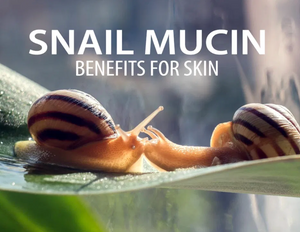 What are the benefits of using snail cream?