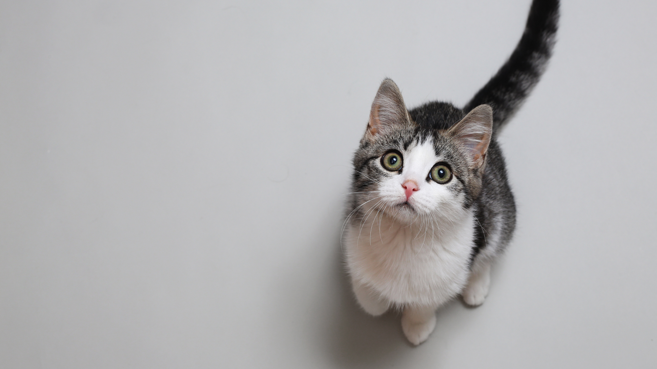 Cat Nutrition: How Many Calories Does A Cat Need?