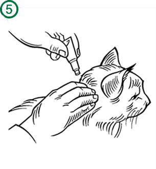 Bayer - Advantage II - Topical Flea Treatment for Cats