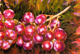 Grapes - SOLD -  by MK Anisko