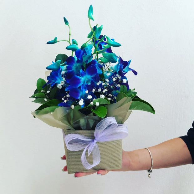 Blue orchid box - caringbahflowersgifts