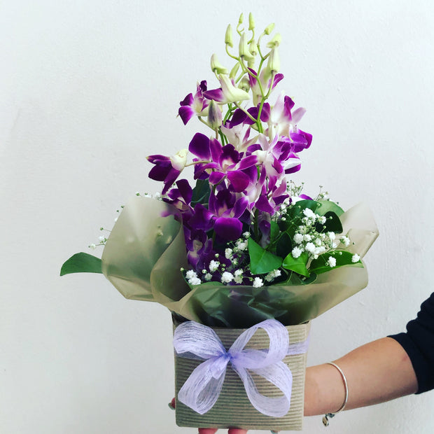 Pink orchid box - caringbahflowersgifts