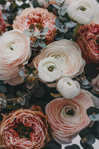photograph of flowers white and light pink colours