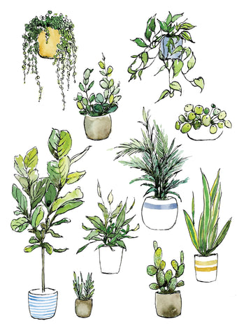 Watercolour art print of indoor house plants by For My Dearest