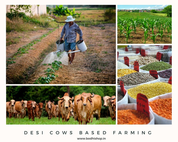 Desi Cow Based Farming