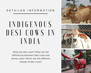 What are desi cows? Which is the best breed of Desi cows in India?