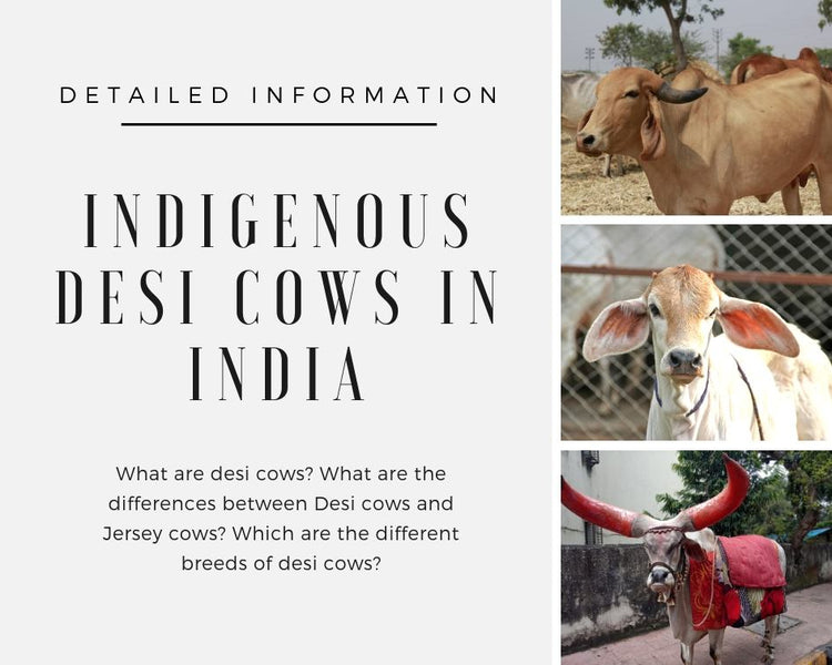 Indigenous Desi Cows in India - Detailed information