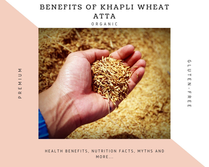 Khapli Wheat - Health Benefits, Medicinal benefits, and more...