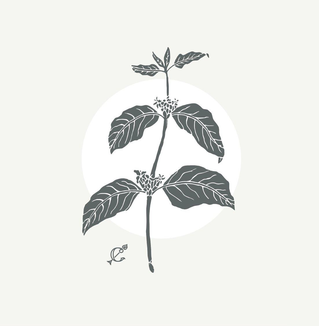 "White T-Shirt – ""Coffee Plant"""