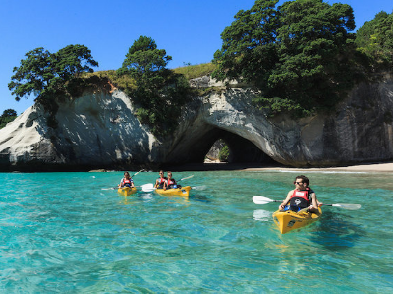 Private tours Auckland