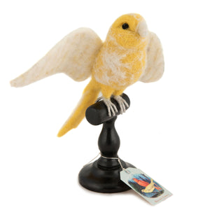 Taxidermy Yellow Norwich Canary