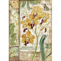 STAMPERIA - RICE PAPER A4 - AMAZONIA ORCHID