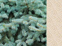 Kaisercraft - 12 x 12 - Mint Wishes - Fresh Pine