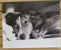 Giftcraft Black and White Dog Picture