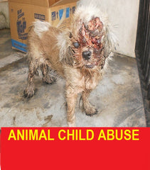 Dog who has been abused-someone burnt the dog.