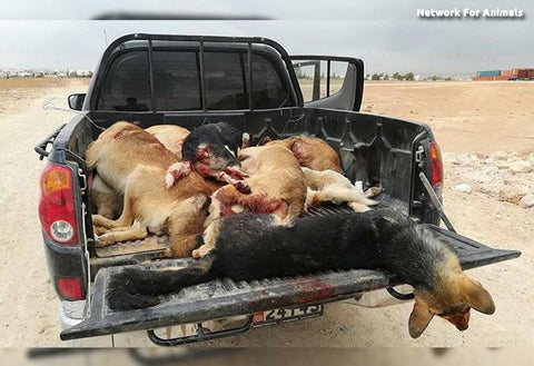 Animals killed from war