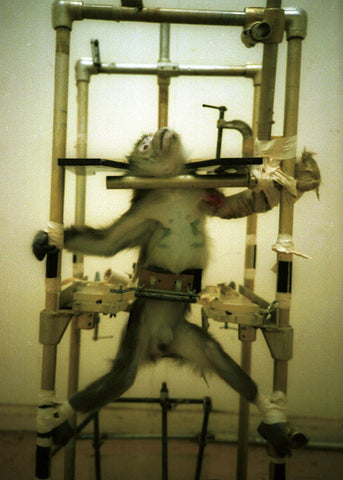 Monkey strapped in some gadget for experimentation