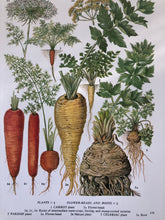 Load image into Gallery viewer, Vintage Vegetable bookplate