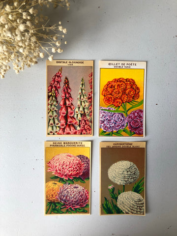 Set of Four Original French Flower Seed Labels, Foxgloves