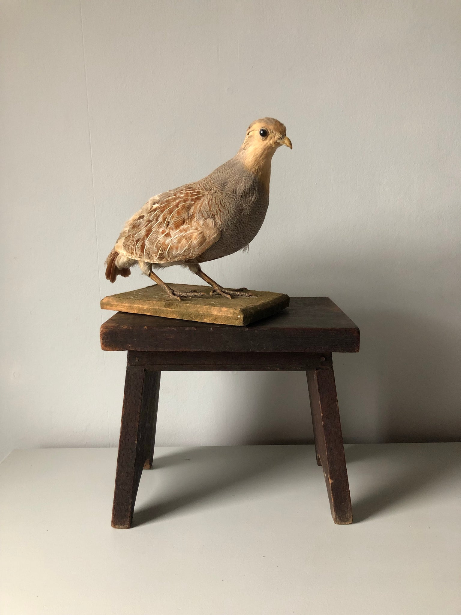 Vintage French Partridge