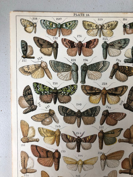 Original Butterfly/Moth Bookplate, Plate 15