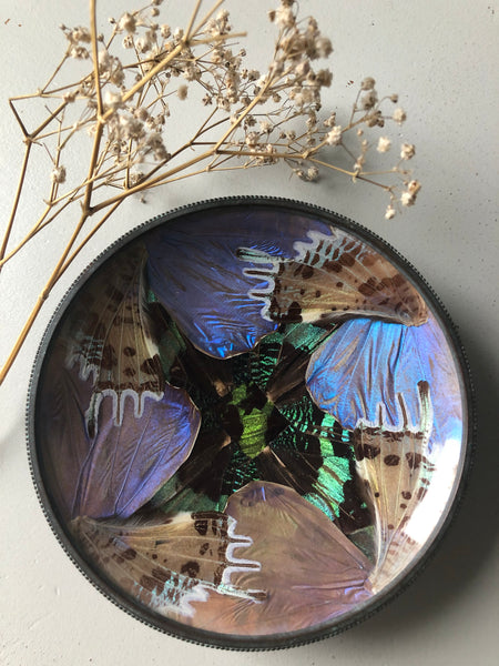 Vintage Butterfly Trinket Dish