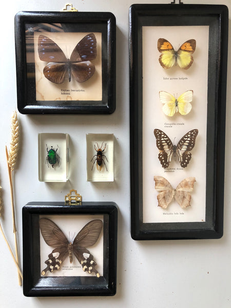 Antique Framed Vintage Butterfly