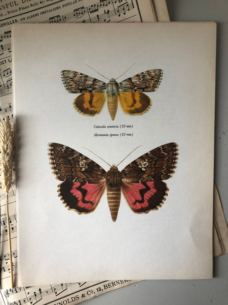 Vintage Bookplate, Catocala Moth