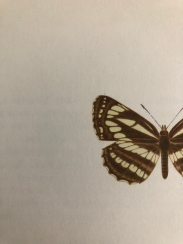 1960s Butterfly Bookplate, Neptis Hylus