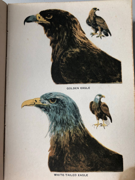 Vintage 'Bird Book for the Pocket'