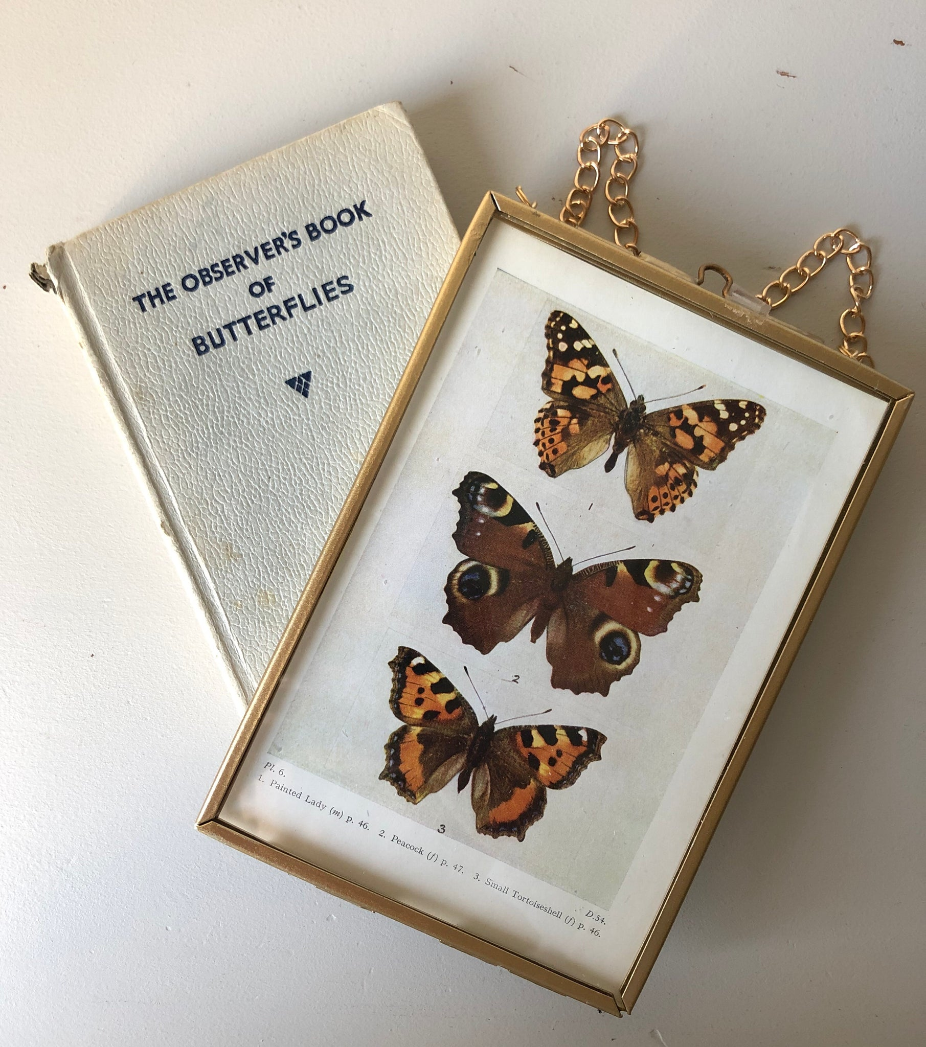 NEW - Framed 1920's Butterfly Bookplate, Peacock