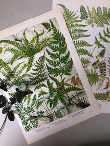 Pair of Vintage Botanical Fern prints