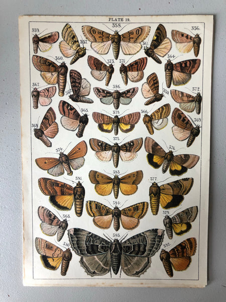Original Butterfly/Moth Bookplate, Plate 19