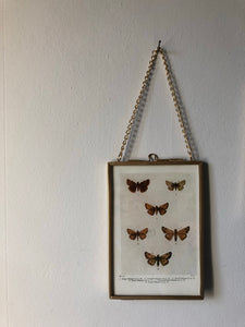 NEW - Framed 1920's Butterfly Bookplate, Swallow-tail