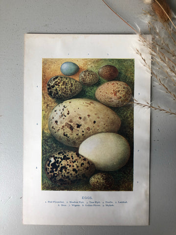 1920s Original Bookplate, Eggs - Skylark
