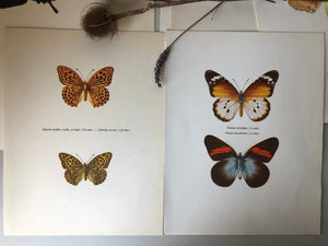 Pair of Vintage Butterfly Bookplates / Prints, Argynnis paphia