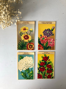 Set of Four Original French Flower Seed Labels, Pheasants Eye