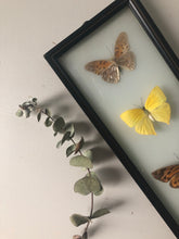 Load image into Gallery viewer, Vintage Butterfly Frame