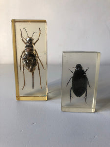 Vintage Insect Resin Block