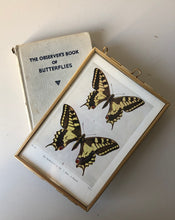 Load image into Gallery viewer, NEW - Framed 1920's Butterfly Bookplate, Swallow-tail