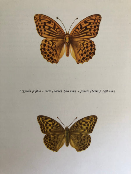 Original Butterfly Bookplate, Argynnis paphia