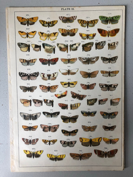 Original Butterfly/Moth Bookplate, Plate 32