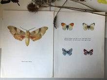 Load image into Gallery viewer, Pair of Vintage Butterfly Bookplates / Prints, Marumba quercus